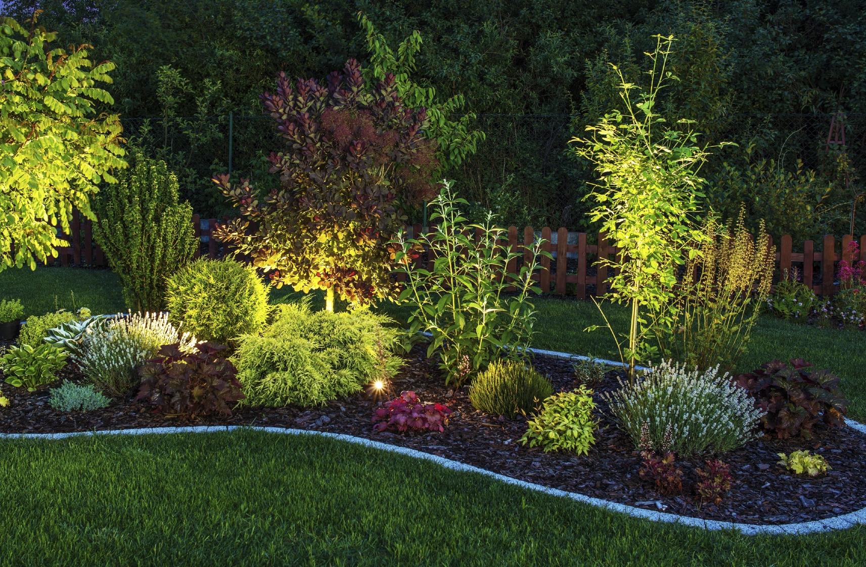 Illuminated Garden